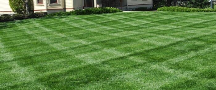 Cincinnati Lawn Care Weed Control Amp Aeration Royse